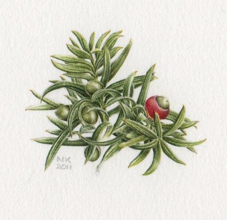 Nina Krauzewicz Yew Berries 2011
